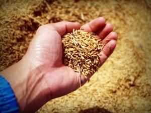 cerealele-integrale-fulgi-de-ovaz-si-orez-brun